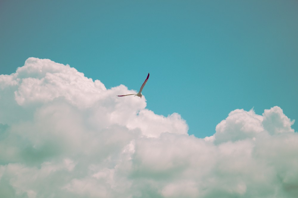 Bird soaring high like the feeling of freedom and success from selling a business